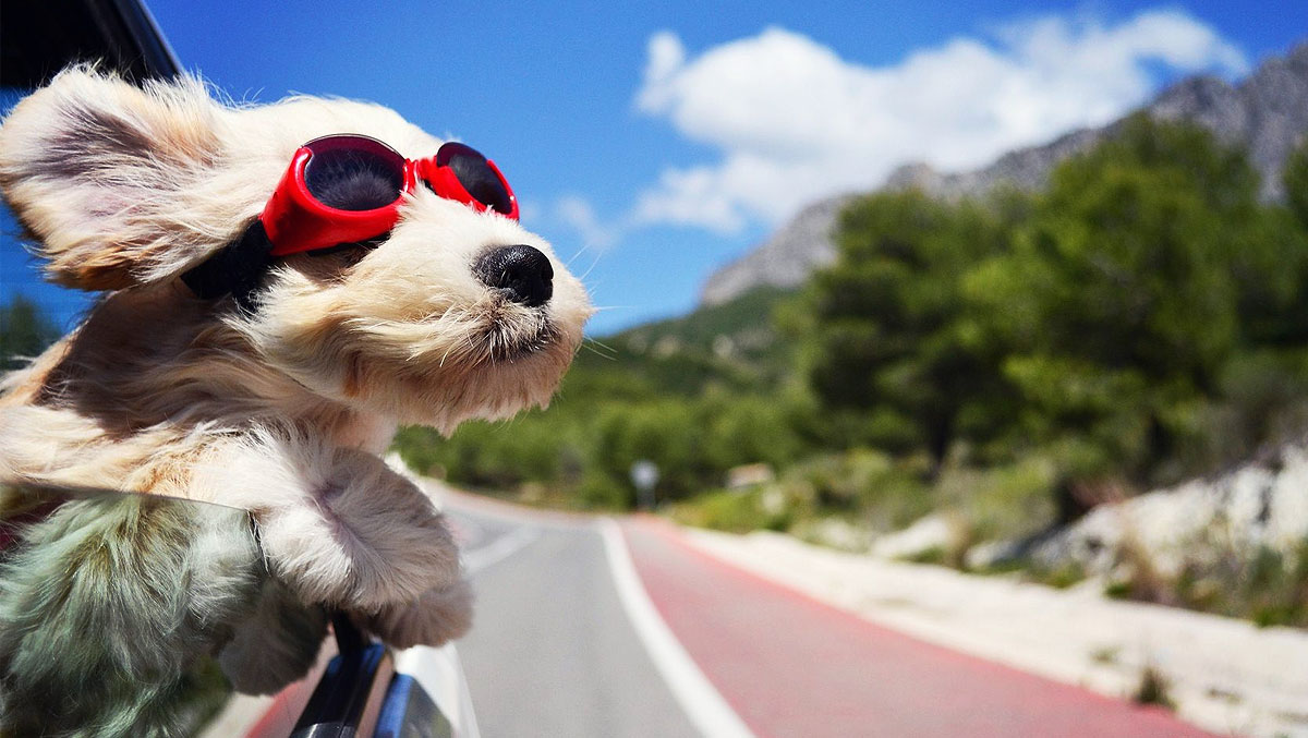 How to Keep Your Luxury Drive Safe for Pets